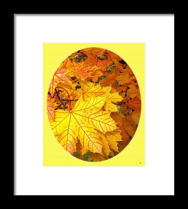 Autumn Framed Print featuring the photograph Country Color 18 by Will Borden