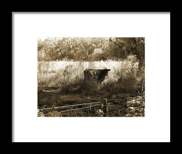 Cows Framed Print featuring the photograph Cows In Pasture by Pamela Stanford