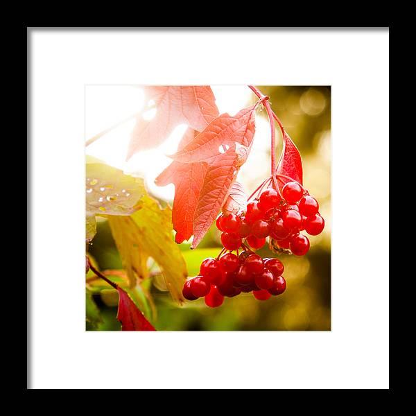 Cranberry Framed Print featuring the photograph Cranberry Bliss by Matt Dobson