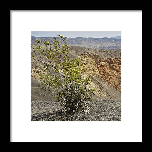 California Framed Print featuring the photograph Crater Bloom by Katja Zuske