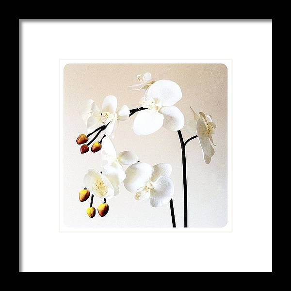 Plant Framed Print featuring the photograph Cream by Mark B