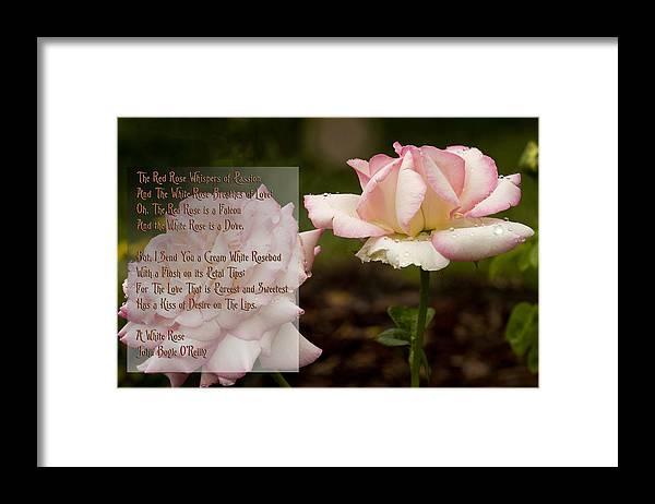 Cream white rosebud with poem framed print by barbara middleton cream white rosebud framed print featuring the photograph cream white rosebud with poem by mightylinksfo