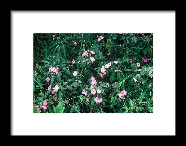 Photo Framed Print featuring the photograph Creek by Alcina Morello