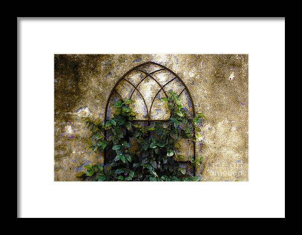 Iron Gate Framed Print featuring the photograph Creeping Vine 1 by Donna Bentley