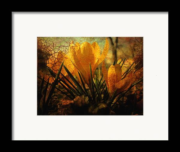 Flower Framed Print featuring the photograph Crocus In Spring Bloom by Ann Powell
