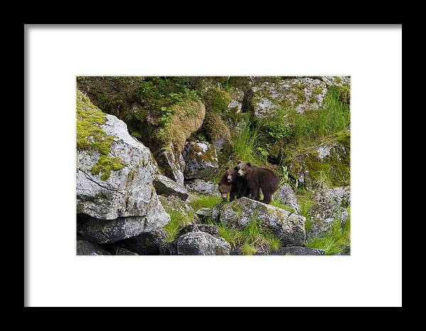 Animal Framed Print featuring the photograph Cubs On A Rock by Tim Grams