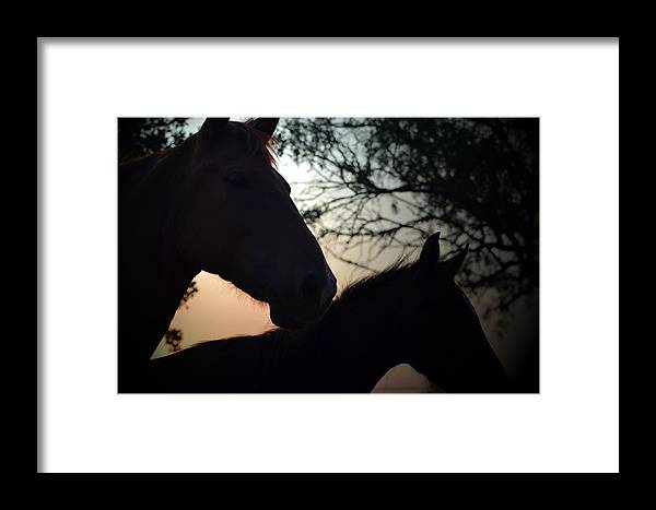 Horse Framed Print featuring the photograph Curiosity by Kelly Kitchens