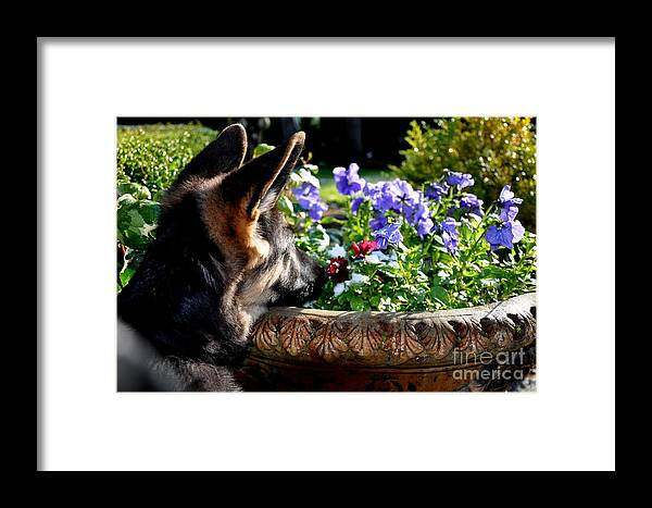 Dogs Framed Print featuring the photograph Curiosity by Tanya Searcy