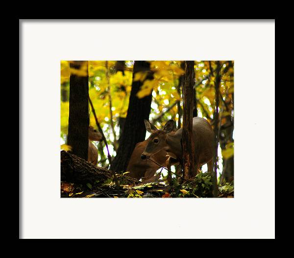 Hovind Framed Print featuring the photograph Curious Doe by Scott Hovind