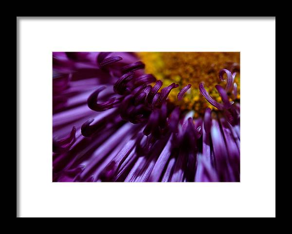 Framed Print featuring the photograph Curling Up by Christy Phillips