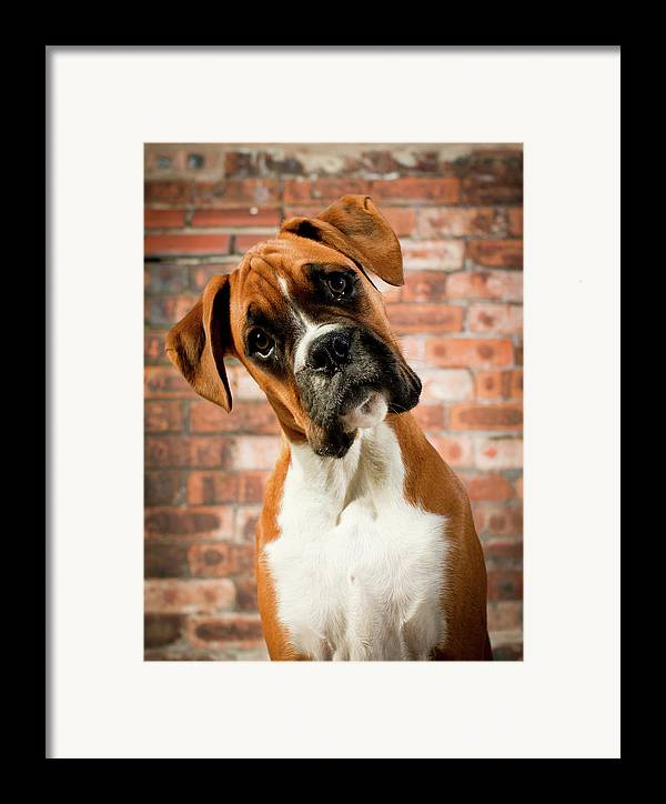 Vertical Framed Print featuring the photograph Cute Dog by Danny Beattie Photography