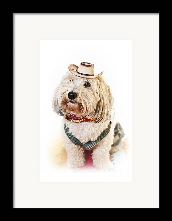 Dog Framed Print featuring the photograph Cute Dog In Halloween Cowboy Costume by Elena Elisseeva