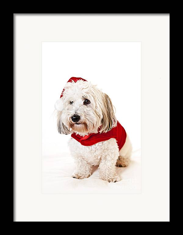 Dog Framed Print featuring the photograph Cute Dog In Santa Outfit by Elena Elisseeva