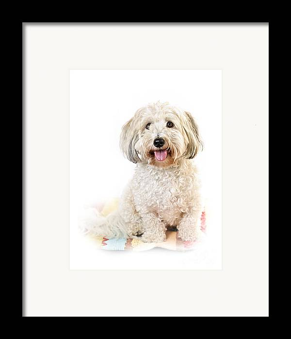 Dog Framed Print featuring the photograph Cute Dog Portrait by Elena Elisseeva