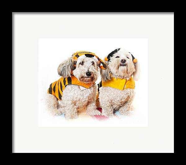 Dogs Framed Print featuring the photograph Cute Dogs In Halloween Costumes by Elena Elisseeva