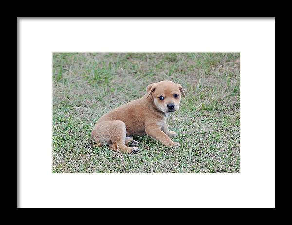 Framed Print featuring the photograph Cute Puppy by Katrina Johns