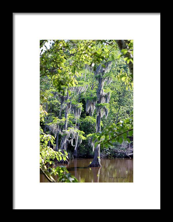Cypress Trees Framed Print featuring the photograph Cypress Strong by Deborah Hughes
