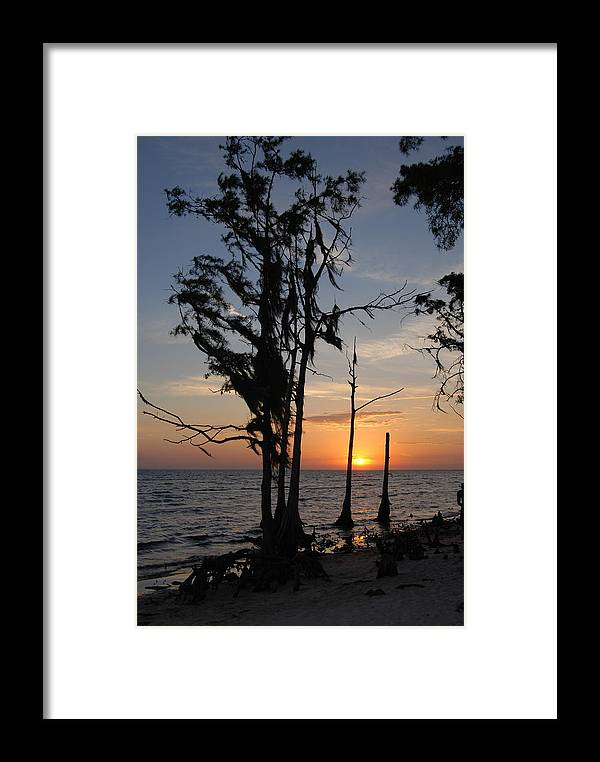 Cypress Framed Print featuring the photograph Cypress Sunset by Beth Gates-Sully