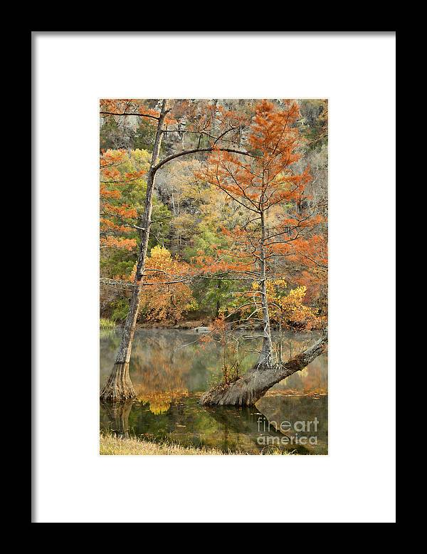 Landscape Framed Print featuring the photograph Cypress Trees in the Morning Light by Iris Greenwell