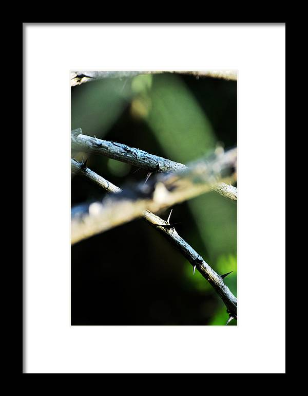 Conceptual Framed Print featuring the photograph Dagger's Journey by Rebecca Sherman