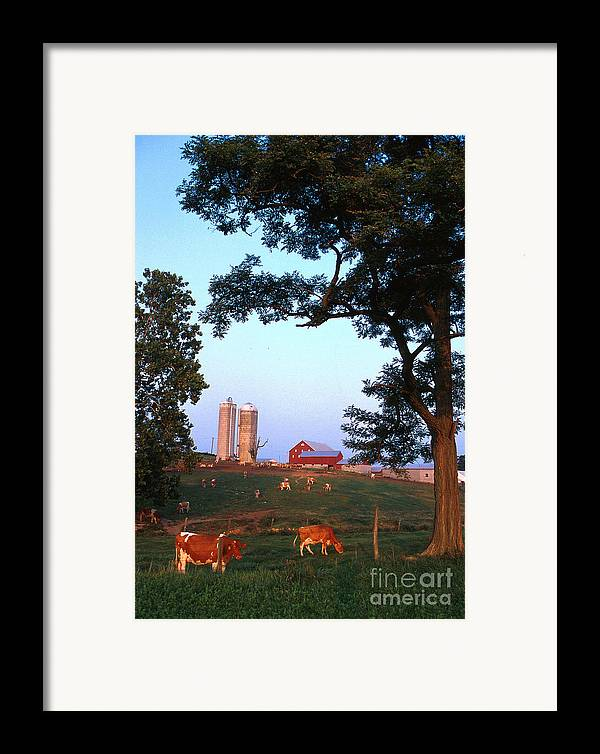 Farm Framed Print featuring the photograph Dairy Farm by Photo Researchers
