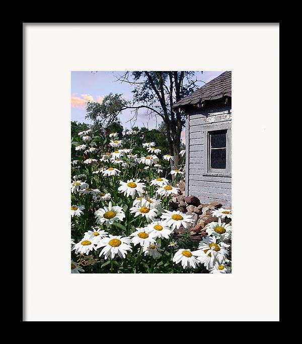 Daisies Framed Print featuring the painting Daises Delight II by Doug Kreuger