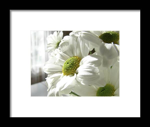 Daisy Framed Print featuring the photograph Daisy Days by Kay Jantzi