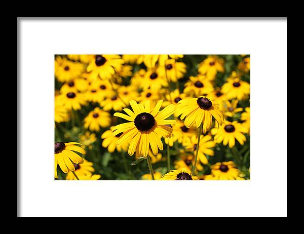 Daises Framed Print featuring the photograph Daisys by Nicholas Caputo
