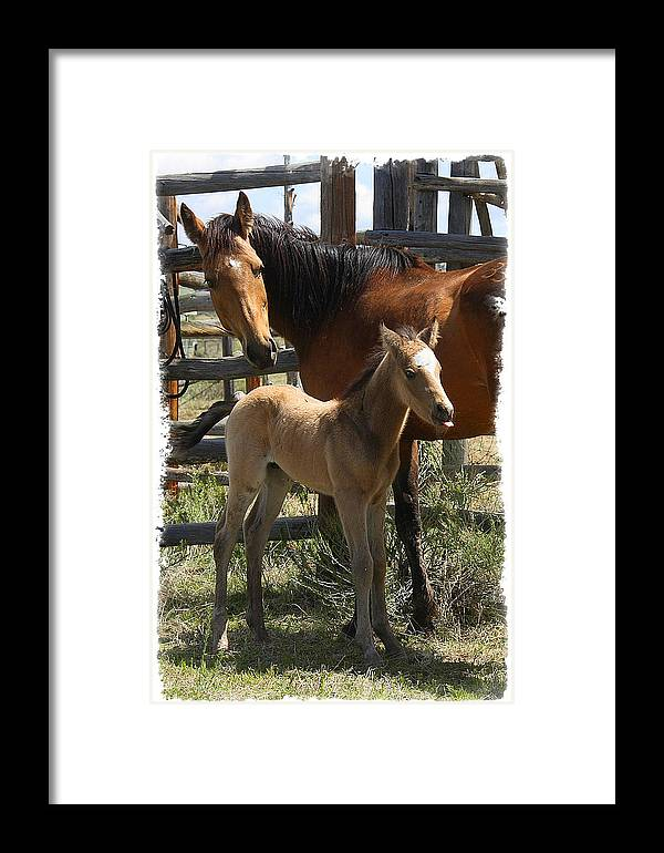 Horse Framed Print featuring the photograph Dam And Foal by Judy Deist