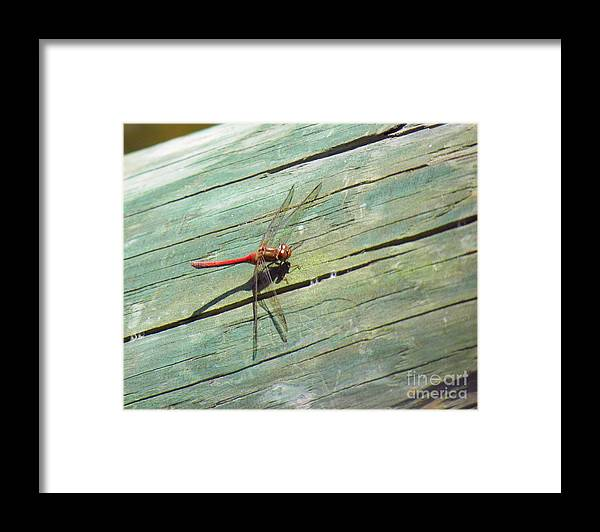 Damselfly Framed Print featuring the photograph Damselfly ready for liftoff by Rrrose Pix