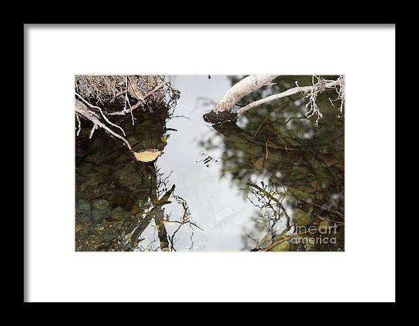 Framed Print featuring the photograph Dance Of The Water Spider by Jane Whyte