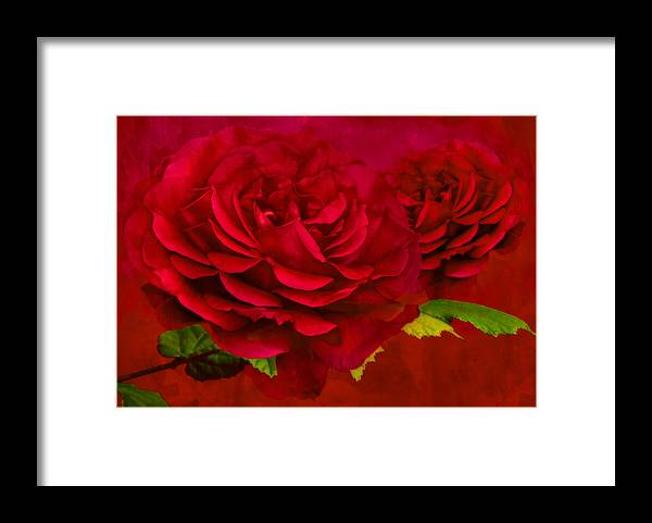 Abstract Framed Print featuring the photograph Dark Pink Rose by Steve Purnell