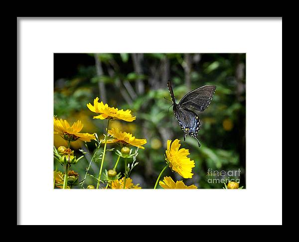 Nava Jo Thompsonk Framed Print featuring the photograph Dawn On Wings by Nava Thompson