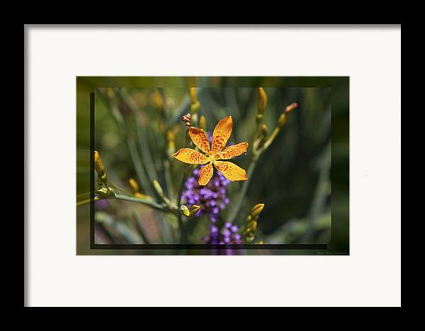 Flower Framed Print featuring the photograph Day Lilly 46 by Charles Warren