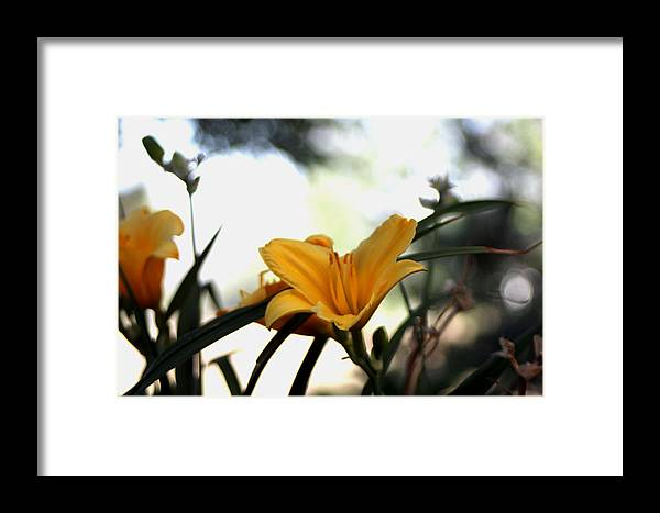 Daylily Framed Print featuring the photograph Daylily Sparkle by Missee Jo