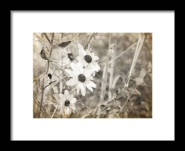 Flowers Photograph Framed Print featuring the photograph Daytime Beauties by Ester Rogers