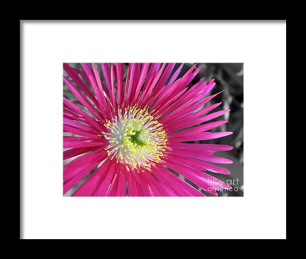 Photography Framed Print featuring the photograph Dazzling Daisy by Kaye Menner