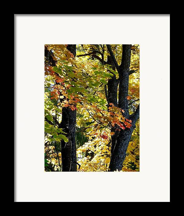 Dazzling Days Framed Print featuring the photograph Dazzling Days Of Autumn by Will Borden
