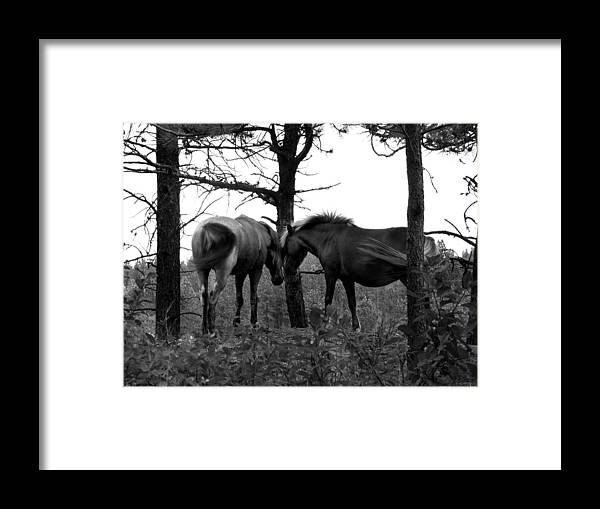 Horses Framed Print featuring the photograph Debbie's Horses by Christy Austin