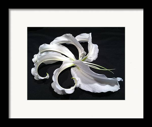 Lily Framed Print featuring the photograph Deconstructed Lily by Anna Villarreal Garbis