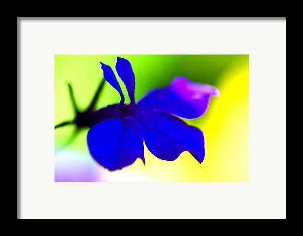 Blue Flower Framed Print featuring the photograph Deeply Blue by Marie Jamieson