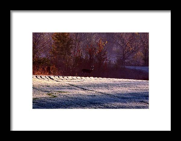 Deer Framed Print featuring the photograph Deer In The Distance by Jake Busby