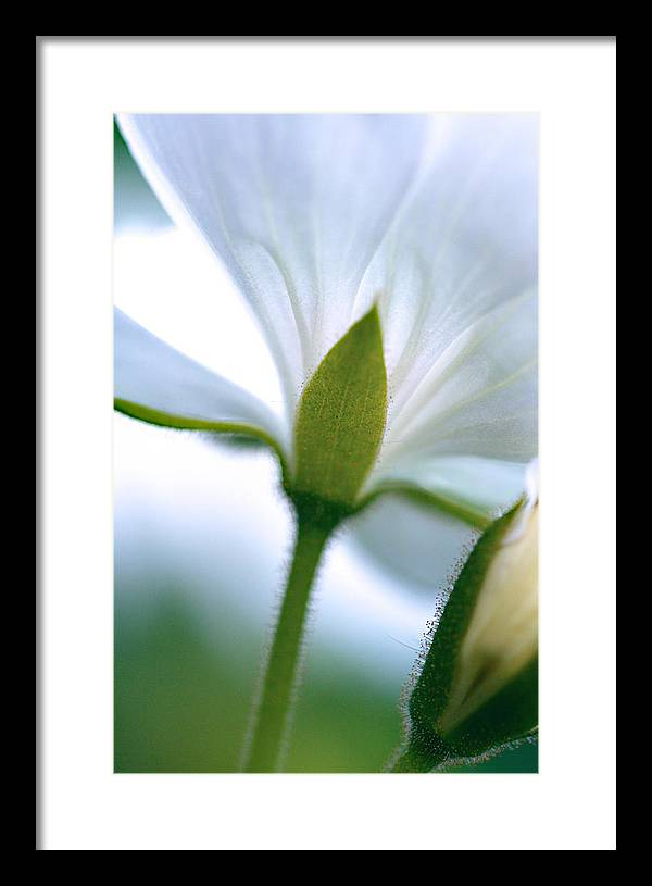 Framed Print featuring the photograph Delicate Petals by Lisa McLean Adams