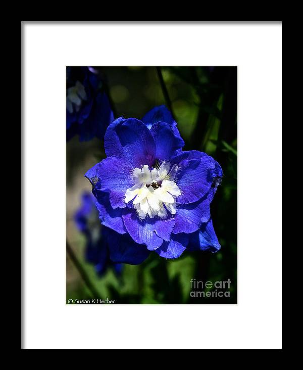 Garden Framed Print featuring the photograph Delphinium Face by Susan Herber
