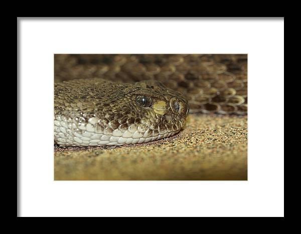 Snake Framed Print featuring the photograph Desert Floor by Paul Slebodnick