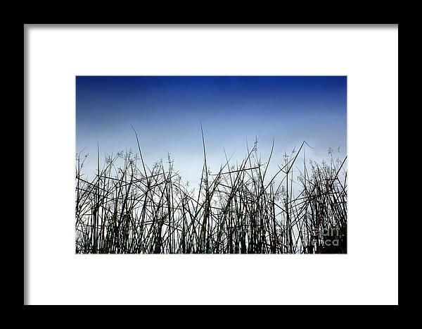 Desert Framed Print featuring the photograph Desert Grass by Antoni Halim