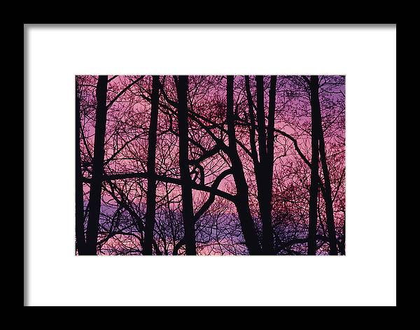 Tree Trunks Framed Print featuring the photograph Detail Of Bare Trees Silhouetted by Mattias Klum
