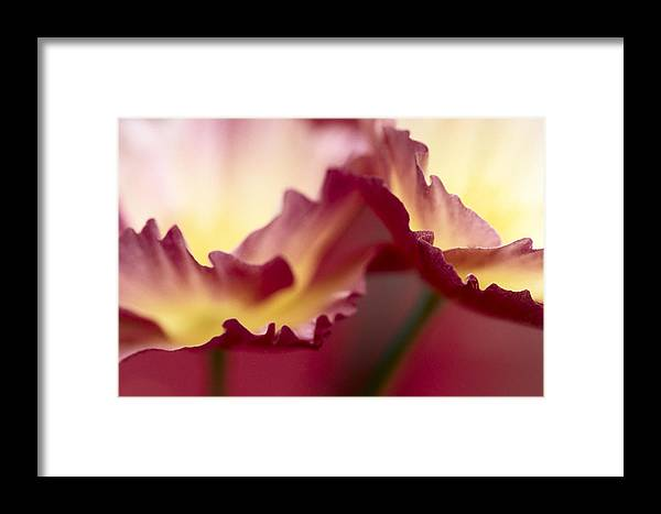 00283567 Framed Print featuring the photograph Detail Of Crimson Colored Rose Petals by Jan Vermeer