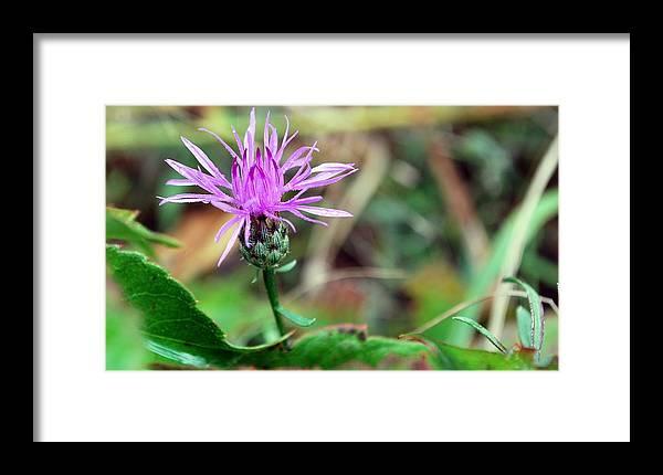 Dew Framed Print featuring the photograph Dew Flower by Robert Bottass