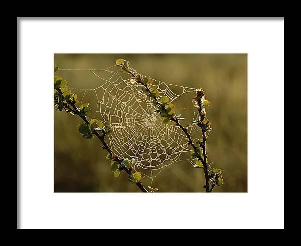Europe Framed Print featuring the photograph Dew Highlights An Orb-weaver Spiders by Mattias Klum